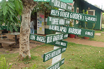 Lanai city