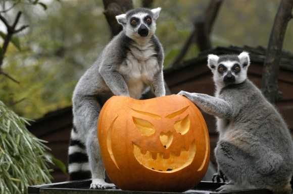 The-Louisville-Zoo-Halloween-Party